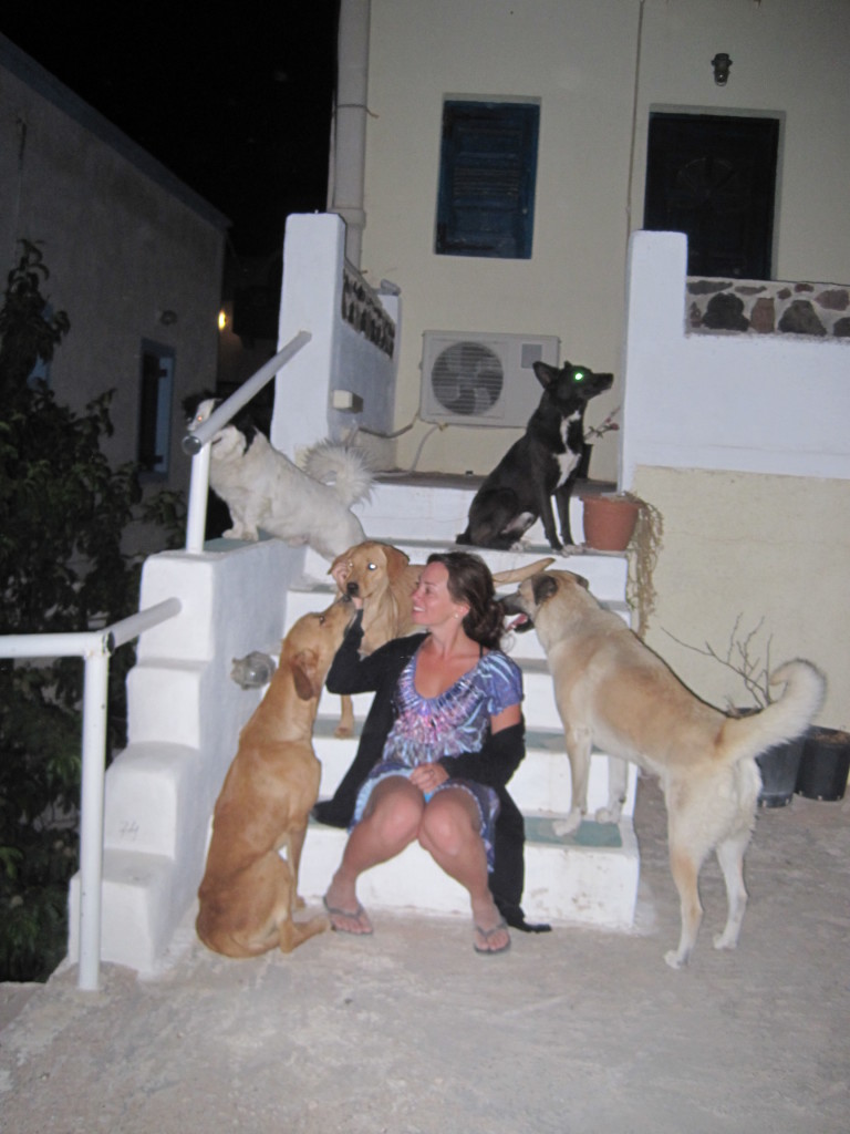 Street dogs of Kos