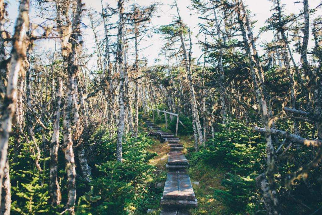 Sherwink Trail, Newfoundland_2