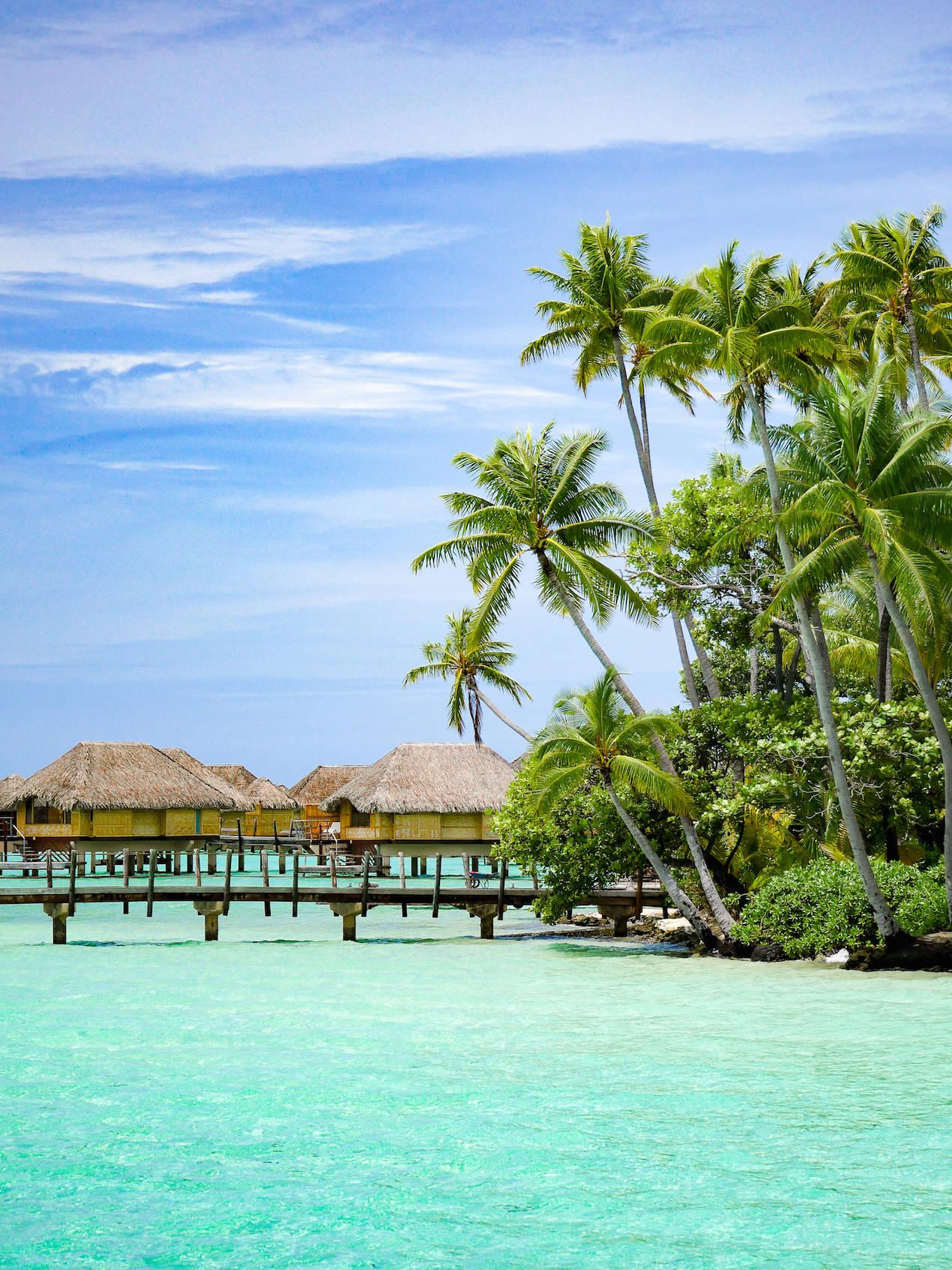 Tahiti_PalmTrees