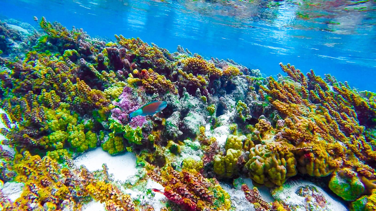 Tahiti_Underwater