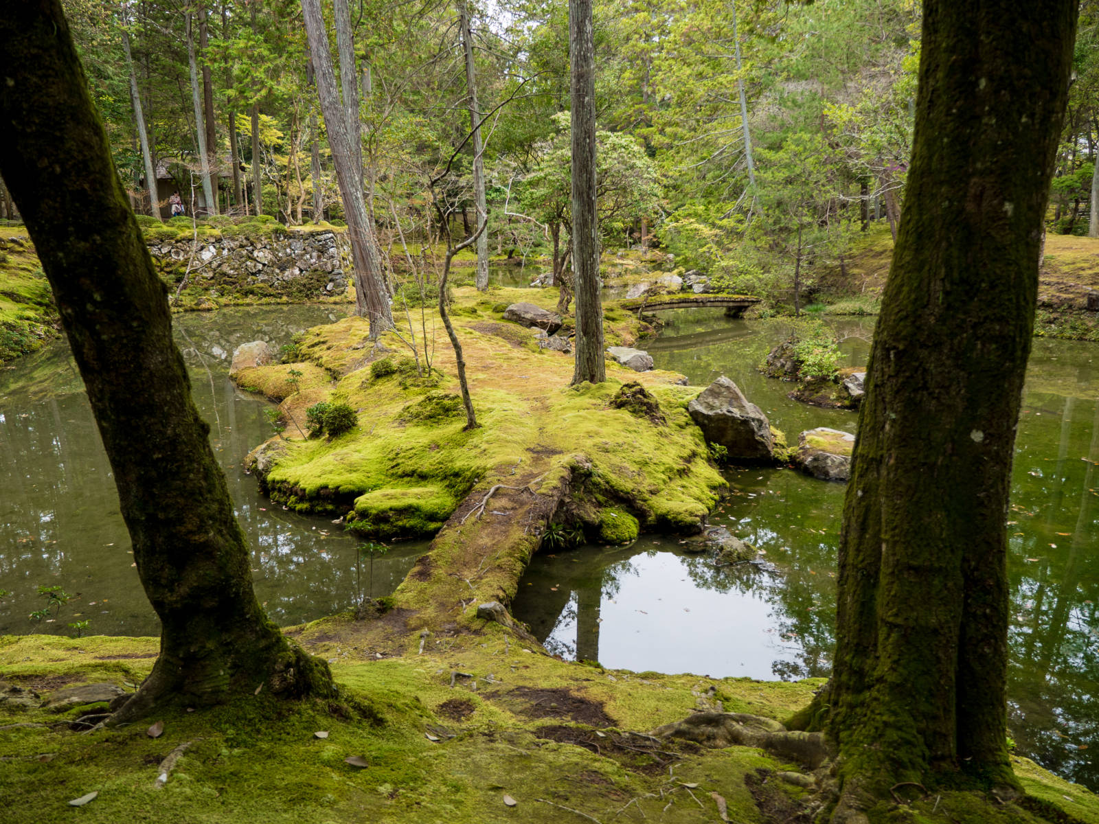 Japan Moss Temple This Japanese Idiom Will Change the Way You Travel Forever
