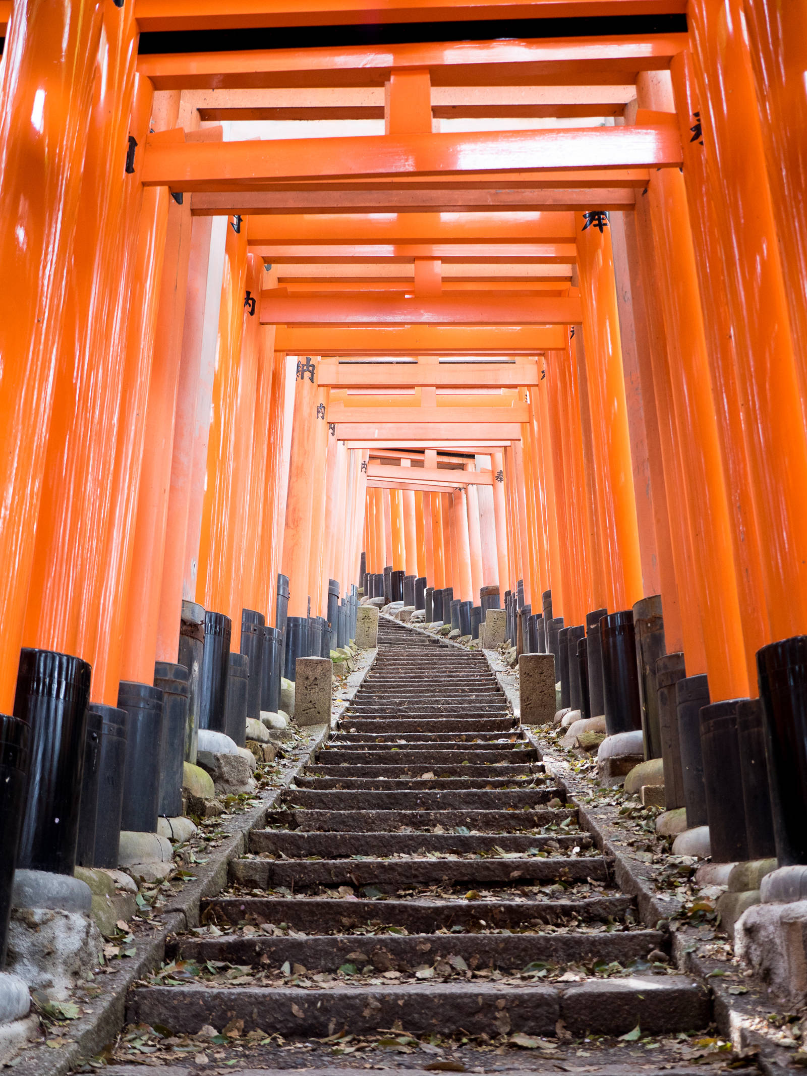This Japanese Idiom Will Change the Way You Travel Forever Japan Torii Gates