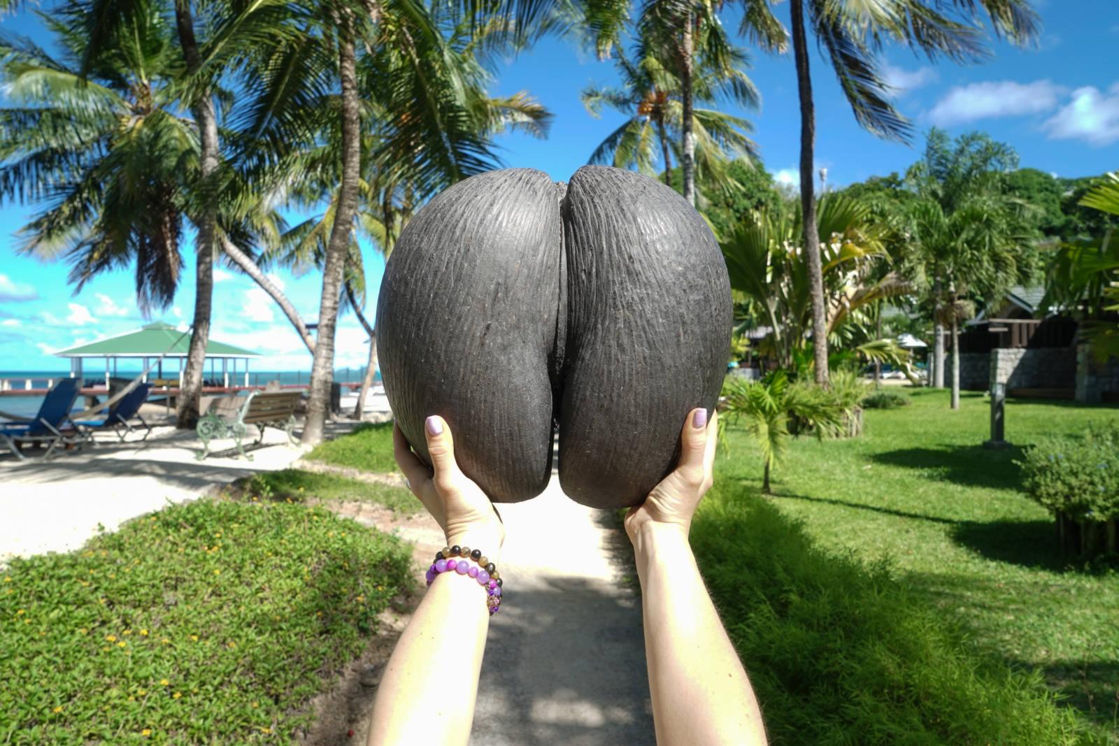 Coco de Mer Seychelles_2