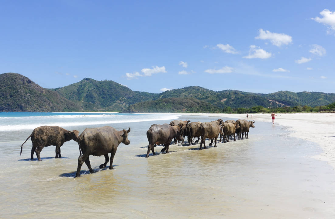 selong-belanak-beach