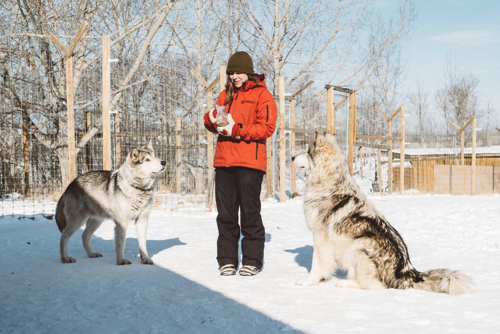 Yamnuksa Wolfdog Sanctuary