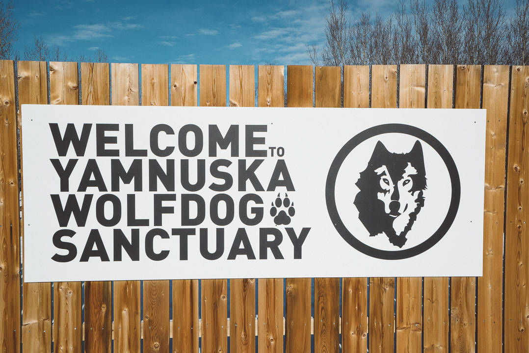 Yamnuksa Wolfdog Sanctuary_2
