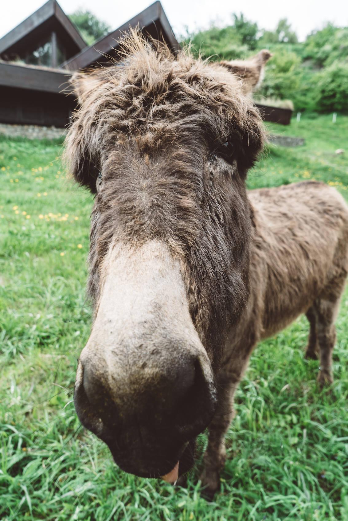 Bratislava Donkey Slovakia