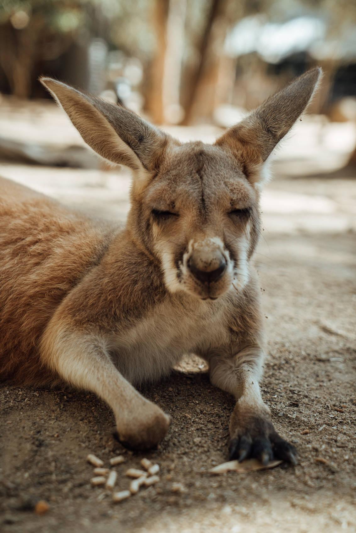 10 top things to do Gold Coast Australia_2