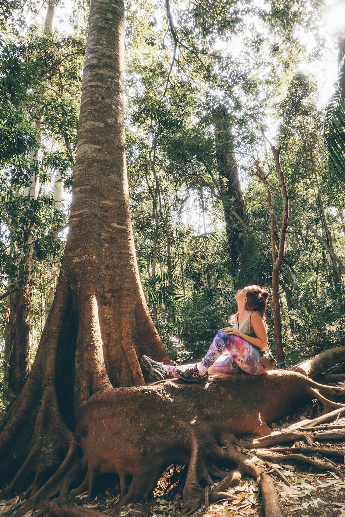 Hiking Curtis Falls Australia_3 copy
