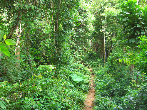 Hiking Through The Malaysian Jungle