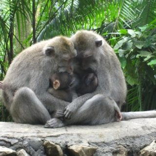 monkey sanctuary indonesia