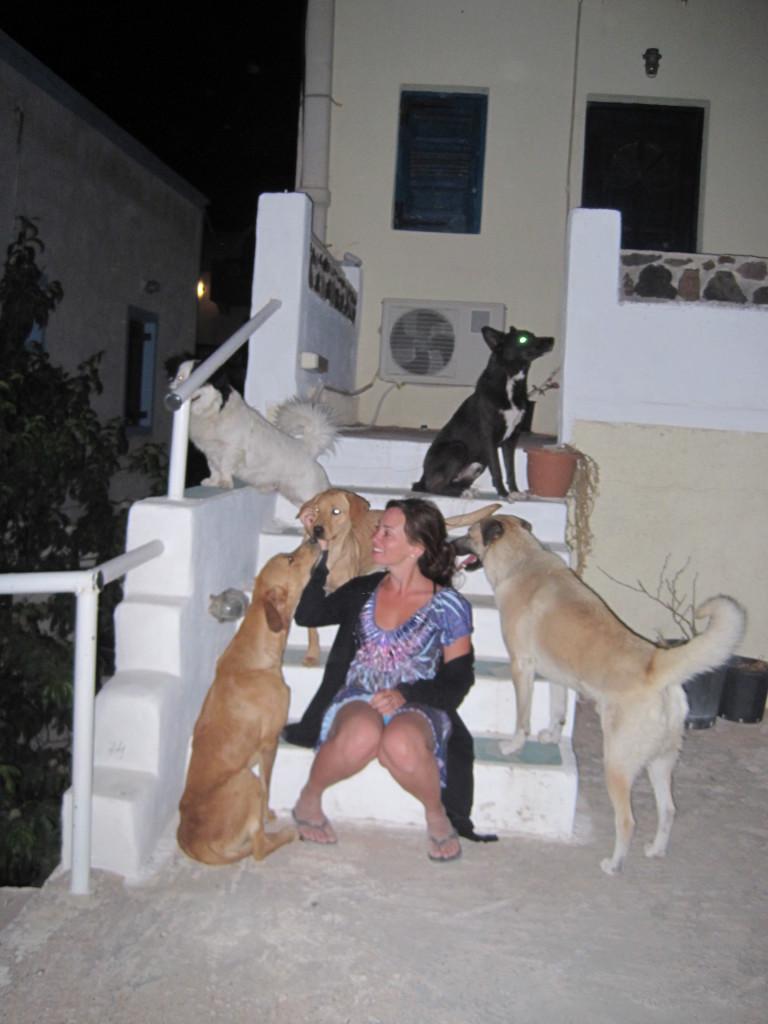 Street dogs of Kos
