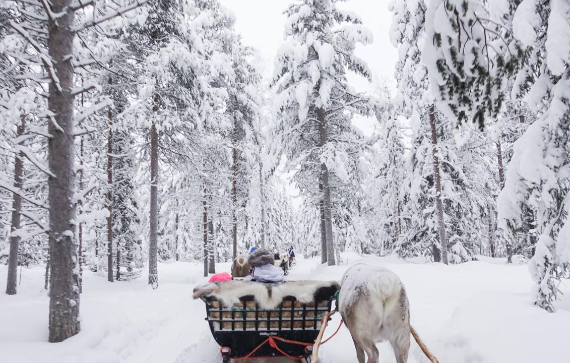 Reindeer Sleigh Ride_3