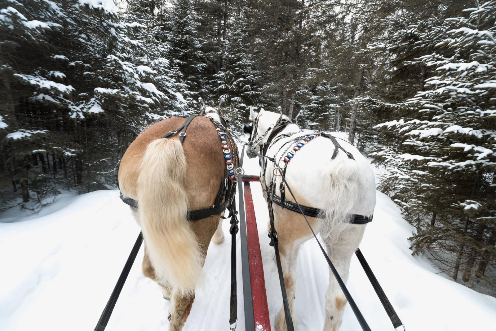 Sleigh Ride Mont Tremblant