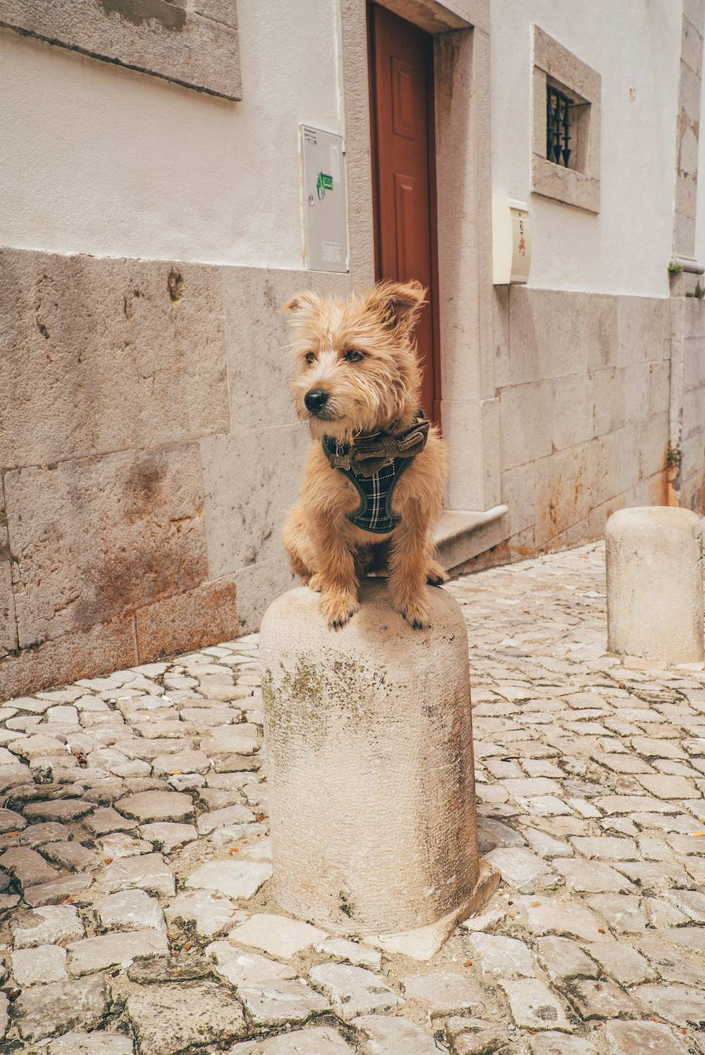 On week in Portugal with a dog