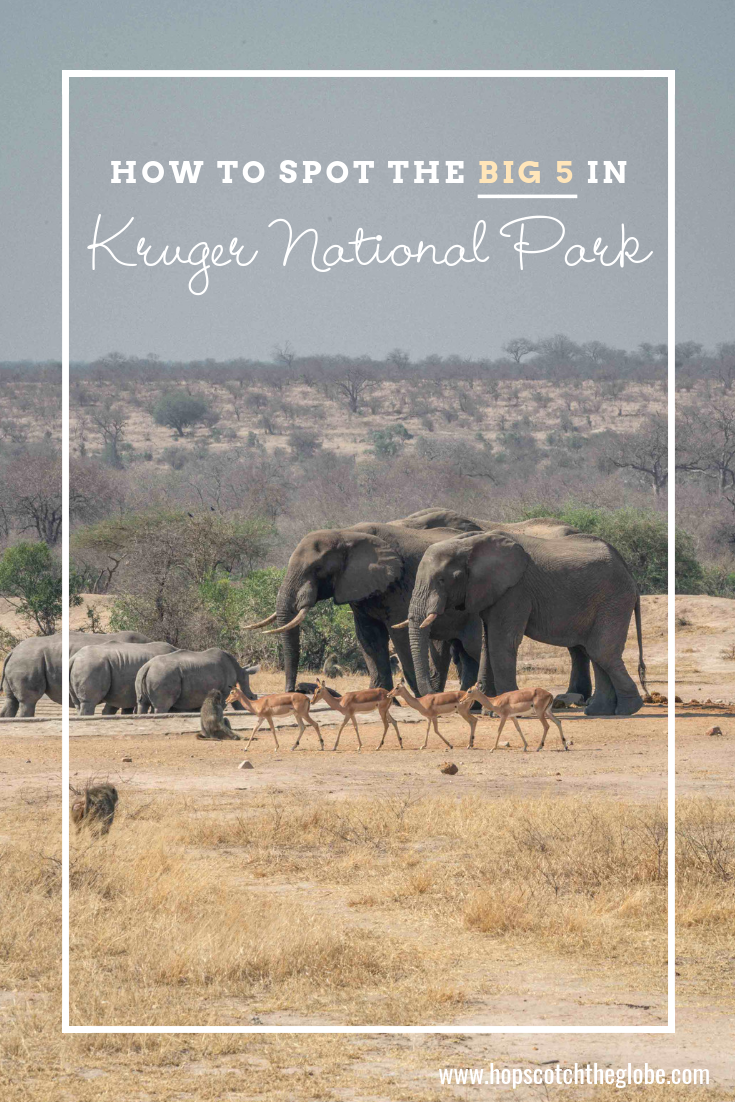 How to spot Kruger National Park animals