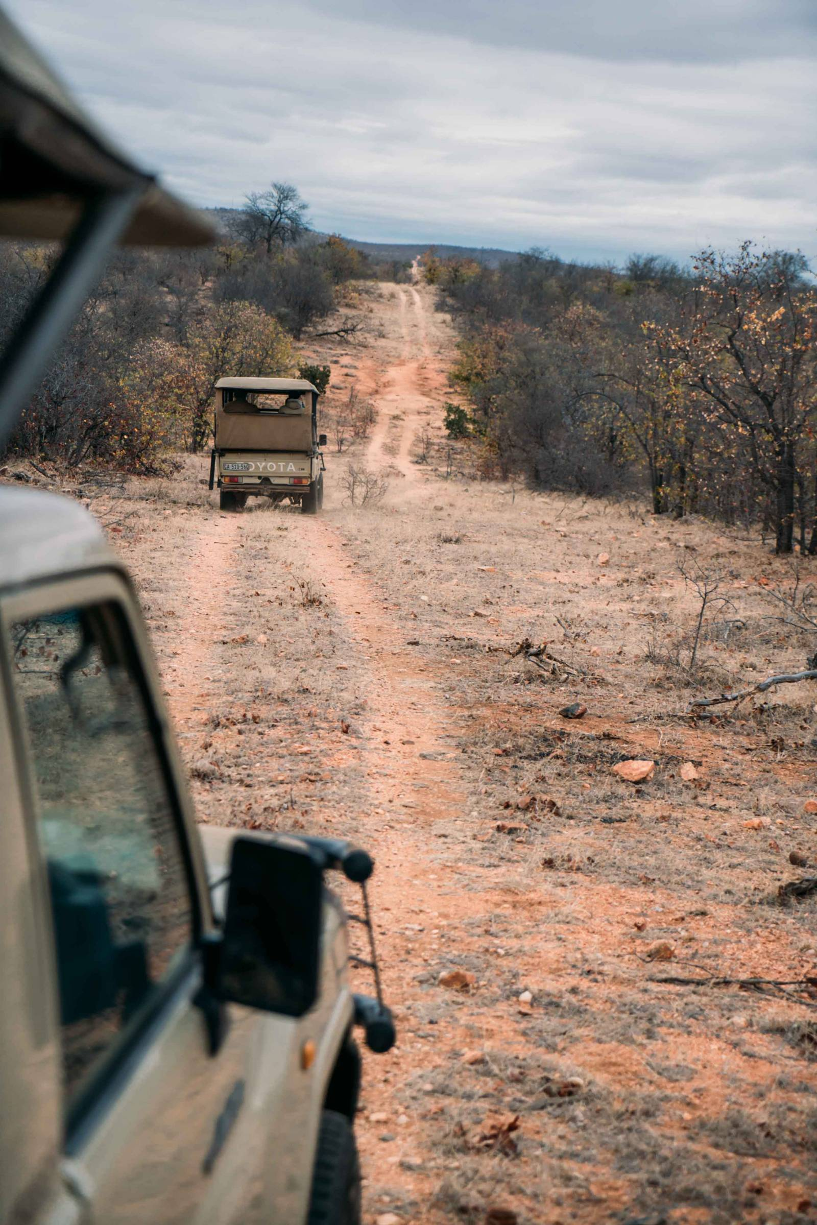 how to spot the big 5 in kruger national park