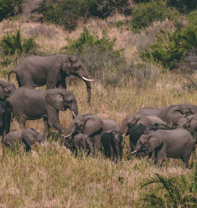 Spot the Big 5 Kruger National Park Animals
