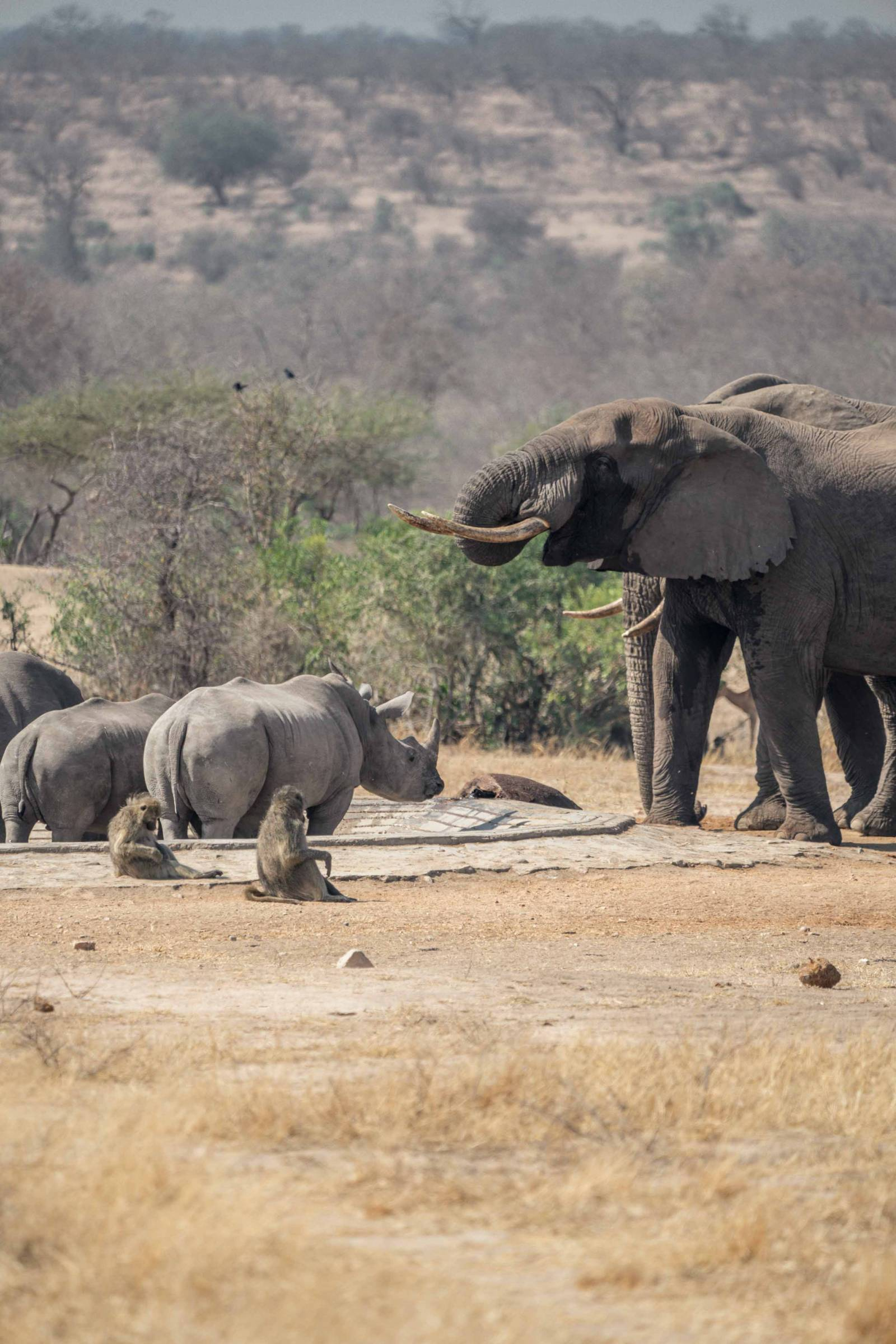 Animals gathering in kruger national park