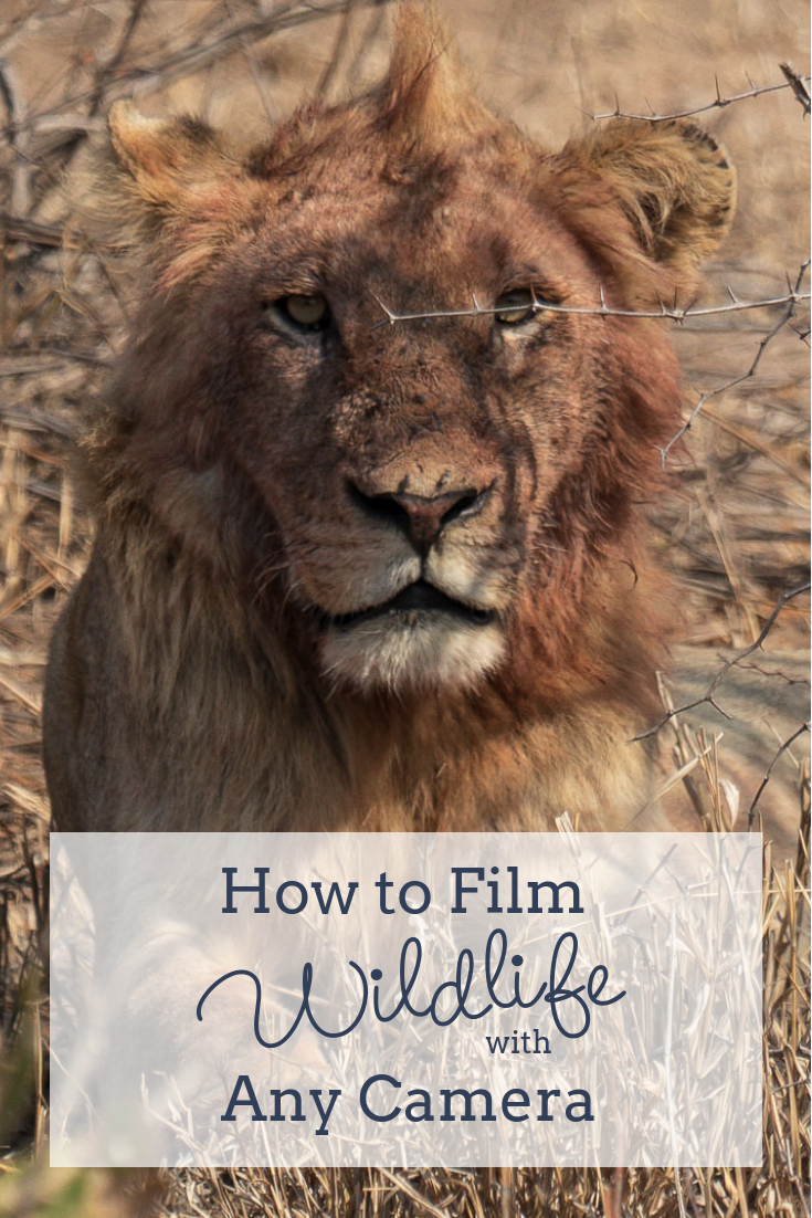 Filming Wildlife with Any Camera