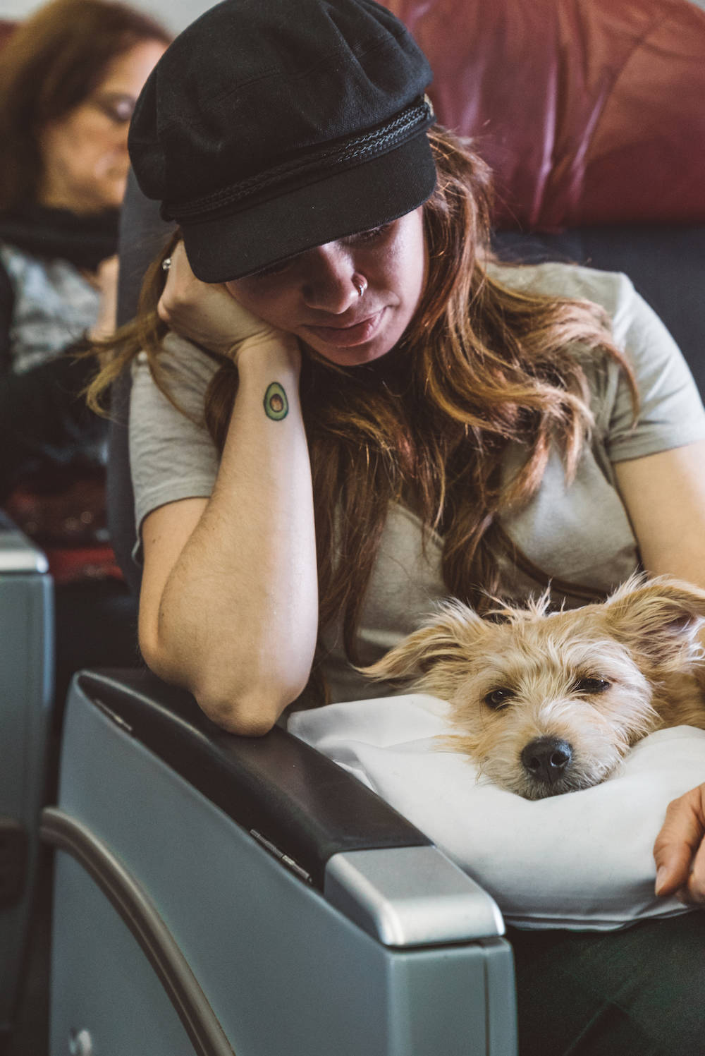 Flying with a dog in cabin on a plane