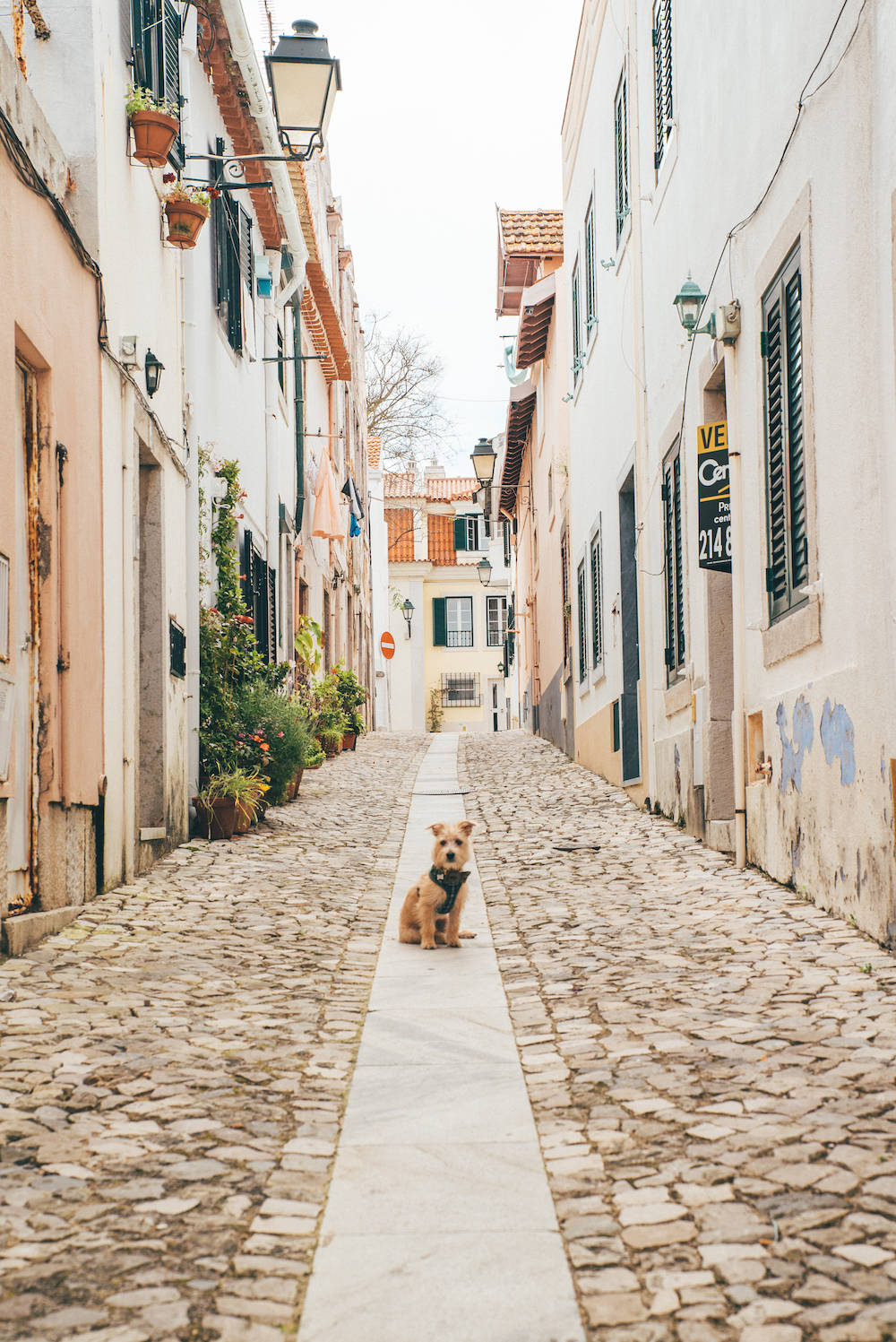 Travel with a dog in europe portugal