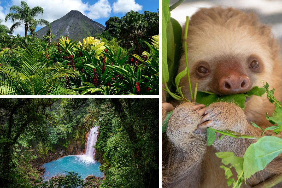Costa Rica Wildlife Impact and Adventure Tour